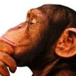 Macaco pensando (?)