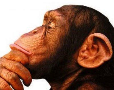 Por que o ser humano é muito mais inteligente que os outros animais?