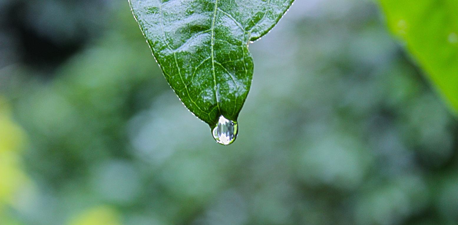 gota concentrando-se ao cair de uma folha