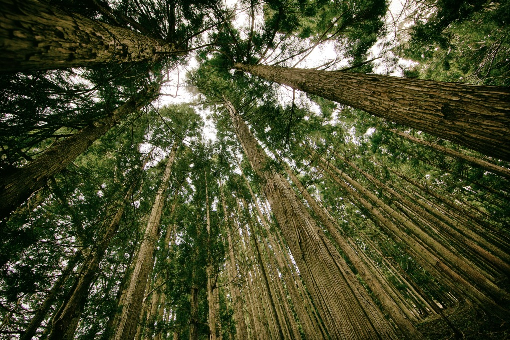 Forest, by Kim Daniel